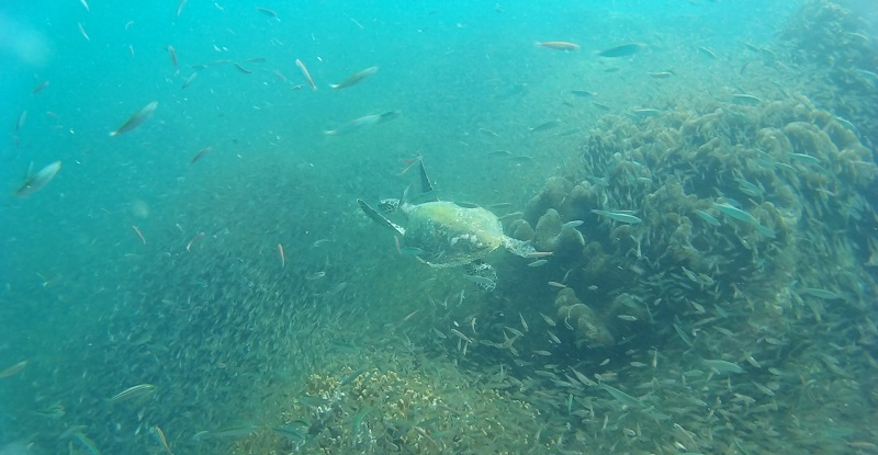 Schildpad tijdens duiken met kinderen