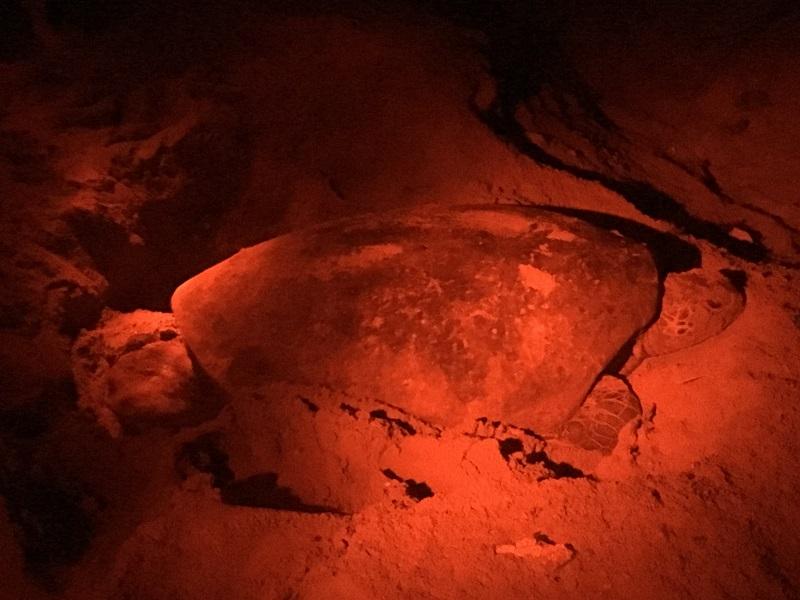 Wildlife in Sri Lanka schildpad