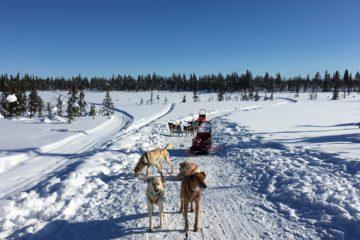 Excursies in Zweeds Lapland huskytocht